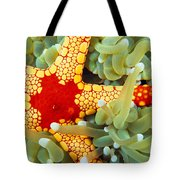 Marine Life, Close-up Tote Bag