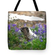 Marmot In The Wildflowers Tote Bag
