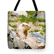 Marmot On Mount Massive Colorado Tote Bag