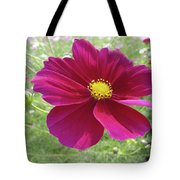 Maroon And Yellow Cosmos Tote Bag