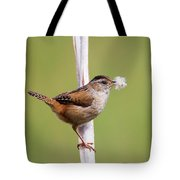 Marsh Wren Nest Building Tote Bag