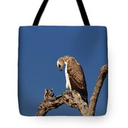 Martial Eagle Tote Bag