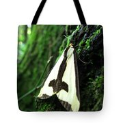 Maryland Clymene Moth Tote Bag