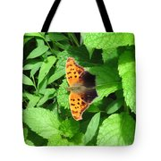 Maryland Eastern Comma Tote Bag