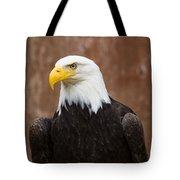 Mature Adult Bald Eagle Tote Bag