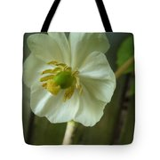May Apple Blossom Tote Bag