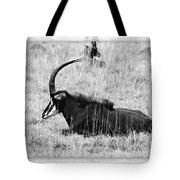 Mbarapi Tote Bag