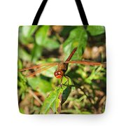 Meadowhawk Dragonfly Tote Bag