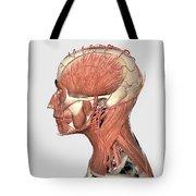 Medical Illustration Showing Human Head Tote Bag