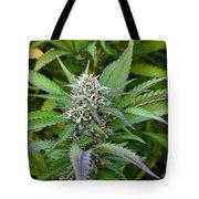 Medicinal Marijuana Growing Tote Bag