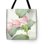 Medinilla Magnifica Tote Bag by Sarah Creswell