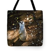 Meerkat     Say What Tote Bag
