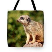 Meerkat 1 Tote Bag