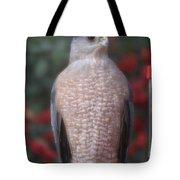 Coopers Hawk I Tote Bag