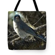 Mexican Jay Tote Bag