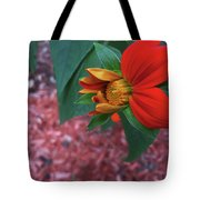 Mexican Sunflower In Mid Bloom Tote Bag