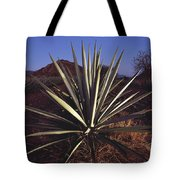 Mexico, Oaxaca, Field Of Agave Plants Tote Bag