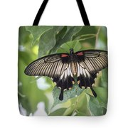 Midland Moth Tote Bag
