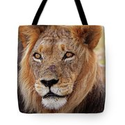 Mighty Lion In South Africa Tote Bag