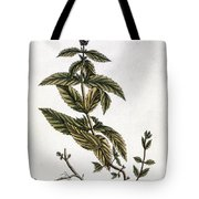 Mint Plant, 1735 Tote Bag