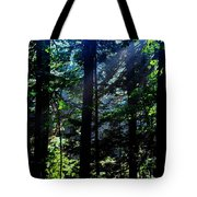 Mist, Leaves And Sunlight Tote Bag
