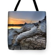 Mistery Old Tree Tote Bag