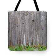 Mistery Poplars Woods  Tote Bag