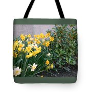 Mixed Daffodils Tote Bag