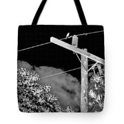 Mockingbird On A Wire Tote Bag