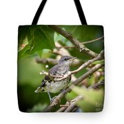 Mockingbird Youngster Tote Bag