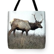 Molting Tomales Bay Elk Tote Bag