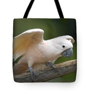 Moluccan Cockatoo At The Omaha Zoo Tote Bag