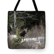 Mom And Calf  In The Forest Tote Bag