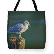 Momentary Pause Tote Bag
