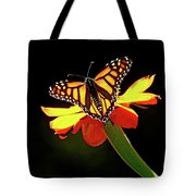 Monarch And Tithonia Light And Shadow Tote Bag