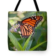 Monarch Butterfly 3 Tote Bag