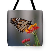 Monarch Butterfly On Milkweed Tote Bag