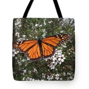 Monarch Butterfly On New Zealand Teatree Bush Tote Bag