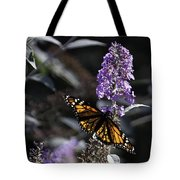 Monarch In Backlighting Tote Bag by Rob Travis