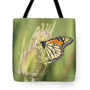 Monarch On A Thistle  Tote Bag