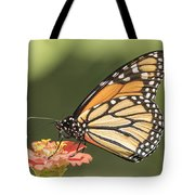 Monarch On Zinnia 4-2015 Tote Bag