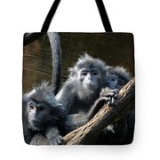 Monkey Trio Tote Bag