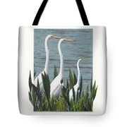 Montage With 3 Great White Egrets Tote Bag