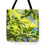 Monterrey Oak Leaves In Spring Tote Bag