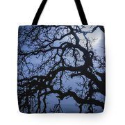 Moonlight And Oak Tree Tote Bag