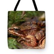 Moor Frog In September  Tote Bag