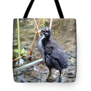 Moorhen Chick Tote Bag