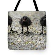 Moorhen Chicks Tote Bag