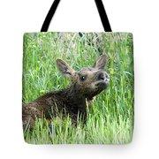 Moose Baby Tote Bag
