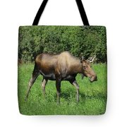 Moose Cow Grazing Tote Bag
